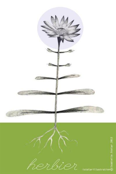 herbier 4
