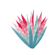 plantes elodie 3