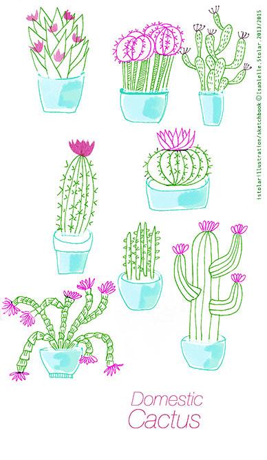cactus in pot  mark